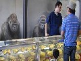 Sales Of Gorillas' Increase Dramatically