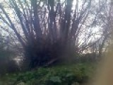 100 Gramm Explosion Of Flash Powder Between Branches. Static Action Cam