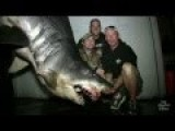 1,300-pound Shark Caught Near Huntington Beach