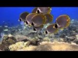 Indonesia Bali - Underwater In HD