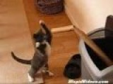 Boxer Cat Get Her Training Of Boxing