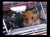 Hamster WTF?