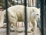 Luxury Items And Wild Animals That Are Regularly Consficated From Cartels