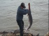Spoonbill Fishing Aka Caviar Harvest One Of The Largest Freshwater Fish In North America