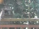 Assault Robin Attacking My House!