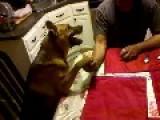 Arm Wrestling Dog Doesn't Fu*k Around!