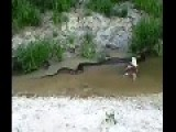 Anaconda Regurgitates An Entire F**** Cow