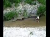 Anaconda Regurgitates An Entire F**** Cow
