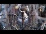 Air Rifle Squirrel Hunting Slow-Motion Jan 21, 2011