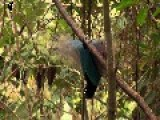 Birds-of-Paradise Project Trailer