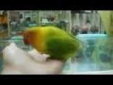 Bird Watching Kardashian Sex Tape