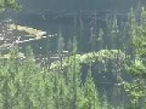 Bigfoot Sasquatch Spotted In Canada!