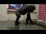 Breakdancing Gorilla