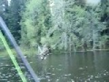 Bald Eagle Takes Fish Off Of Fishing Line