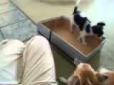 Box Traps Adorable Puppy