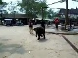 Baby Elephant Afraid And Runs To Mommy