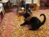 Cute Weasel And Cat Wrestling