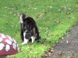Catfight In Garden!