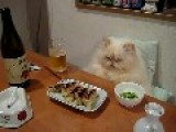 Cute Kitty Whit Your Dinner
