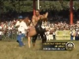 Current News, In English Speaking World First Vid On Media, Turkey: Oil Wrestling Championship Of 7 Jul 2013-vedat-şafak-yamı