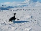 Cool Penguin