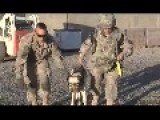 Cute Military Dog Flying On Helicopter In Afghanistan