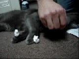 Cat Shaving Cream Prank!
