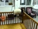 Cute Baby Panda Tries To Escape From Crib