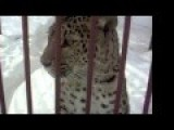Charlie Sheen Leopard Blood