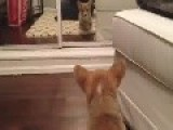 Dog V Mirror