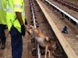 Electrocuting Bambi!