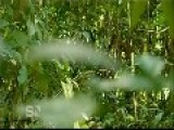 First Contact - Lost Tribe Of The Amazon - Sunday Night - Channel Seven - FULL