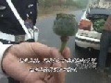 Farmer Growing 20 Stems Of Opium Poppies Busted By Police