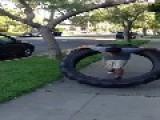 Guy Hula Hoops 100 LB Tire