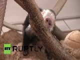 Germany: Justin Bieber Leaves Pet Monkey Trapped Behind Bars