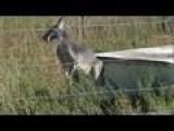HSUS Investigation: Captive Hunting