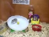 Having Fun Hamster Style