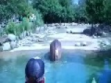 Huge Hippo Fart