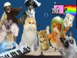 Harlem Shake V. 10,254 - FML Cats! Edition