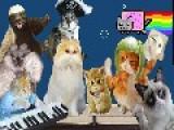 Harlem Shake V. 10,254 - FML Cats! Edition