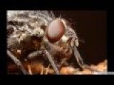 High Magnification Video And Photography - Flies