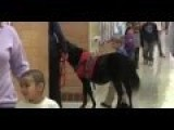 Horse Trained To Help Sick Boy