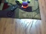 IRobot Auto Vac Spreads The Crap Around ..... Literally