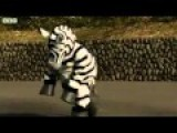 Japan Conducts Earthquake Drill With Wild Zebra Graphic