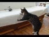 Kitten Vs RC Helicopter