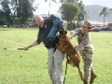 Marine's Best Friend Is Foe's Worst Enemy