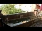 Monkeys Perform Cannonball Jumps Into A Pool