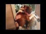 Military Reunions With Man's Best Friend: Dogs Welcoming Home Their Owners From Deployment