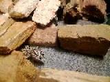 Me Feeding Kumar My Leopard Gecko