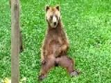 Masturbating Bear